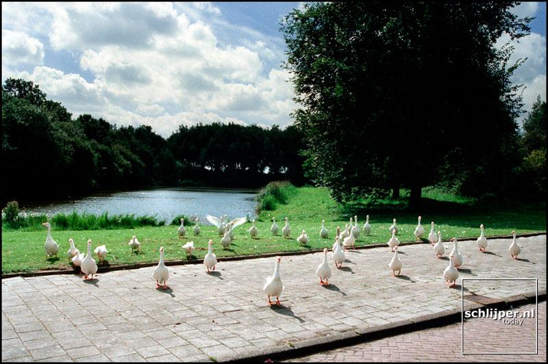 Nederland, Amsterdam, 16 augustus 2000.