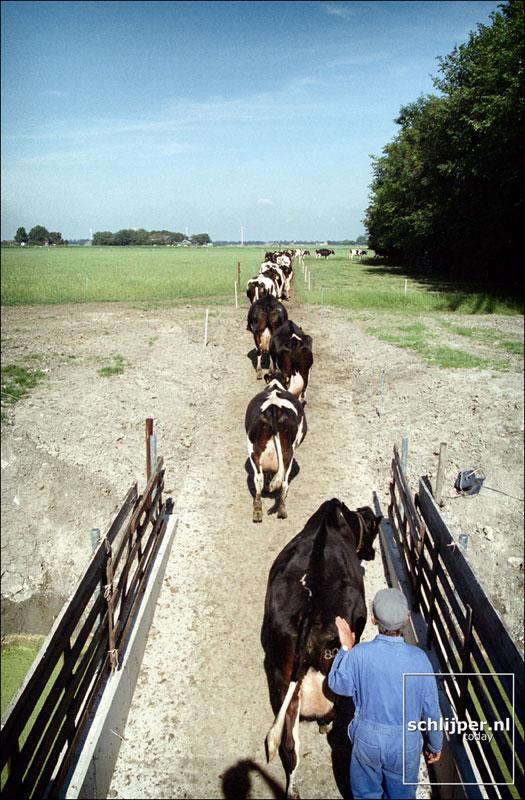 Nederland, Schoorldam, 24 juli 2001.