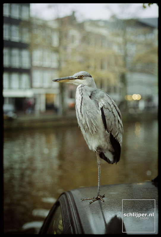 Nederland, Amsterdam, 11 november 2001.