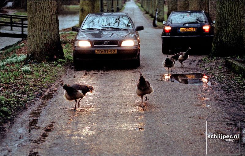 Nederland, Breukelen, 11 februari 2002