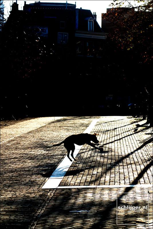 Nederland, Amsterdam, 5 november 2003