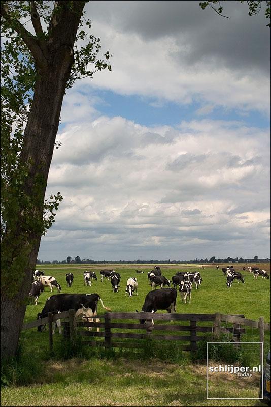 Nederland, Volendam, 21 mei 2004