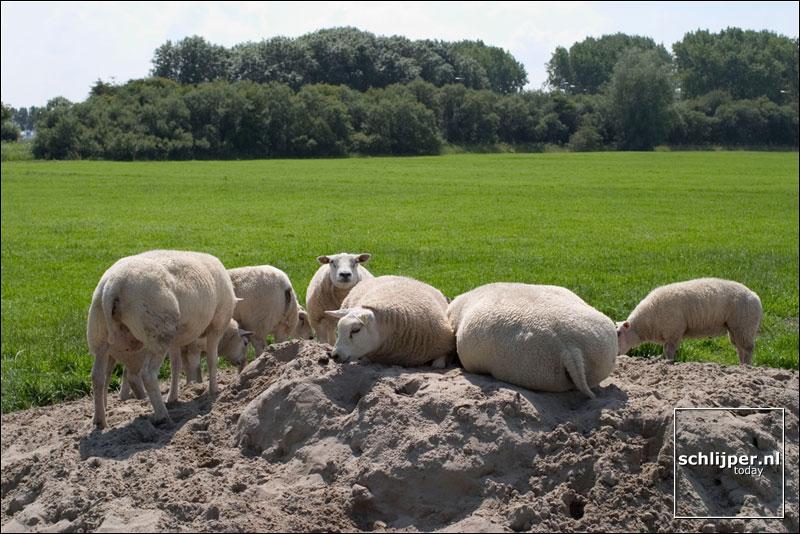 Nederland, Abcoude, 19 juli 2004