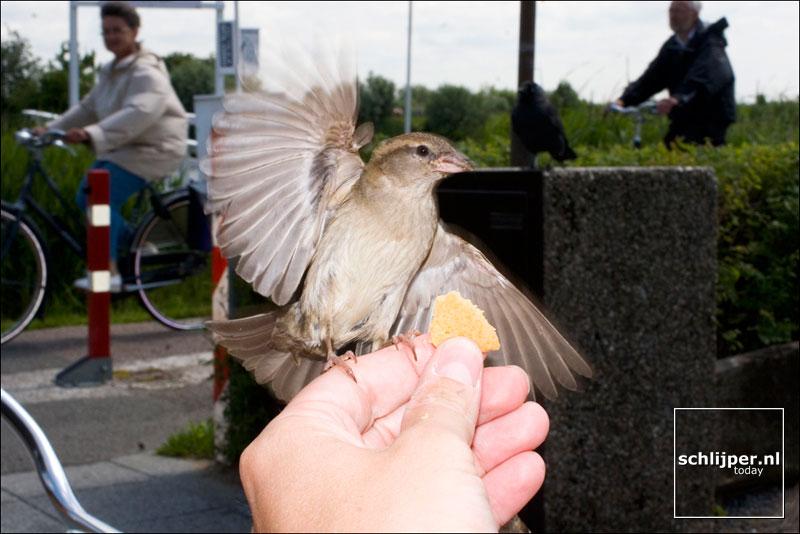 Nederland, Kinderdijk, 8 juni 2005