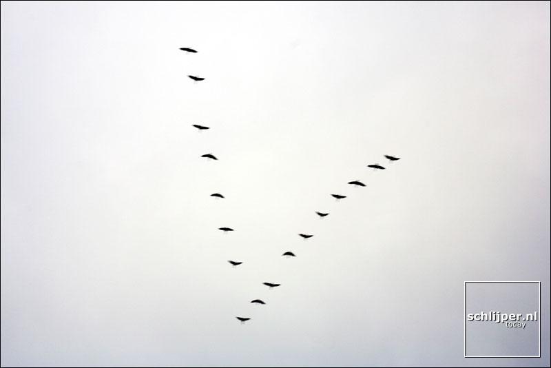 Nederland, Abcoude, 20 december 2005