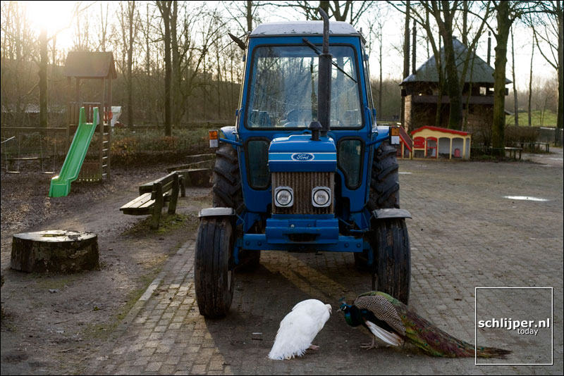 Nederland, Utrecht, 20 januari 2006