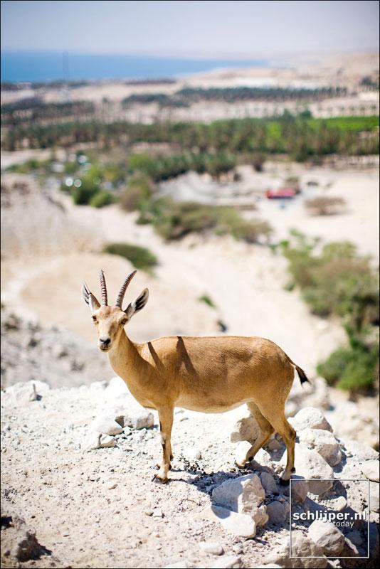 Israel, Dead Sea, 17 juni 2008