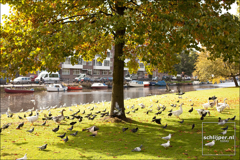 Nederland, Amsterdam, 16 oktober 2009