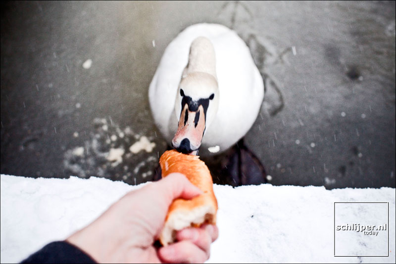 Nederland, Amsterdam, 10 januari 2010