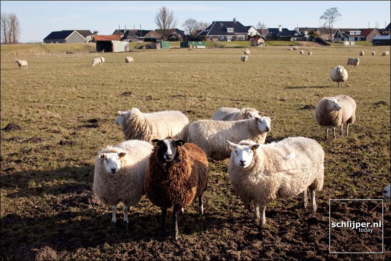 Nederland, Eemdijk, 7 maart 2010