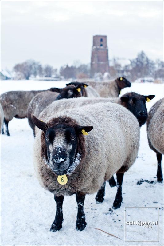 Nederland, Ransdorp, 18 december 2010