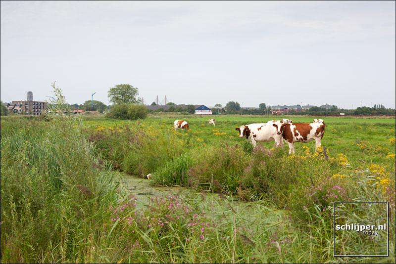 Nederland, Zaltbommel, 2 augustus 2011