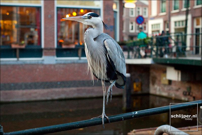 Nederland, Amsterdam, 2 december 2011