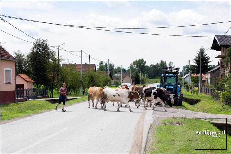 Kroatie, Babina Greda, 26 juni 2014