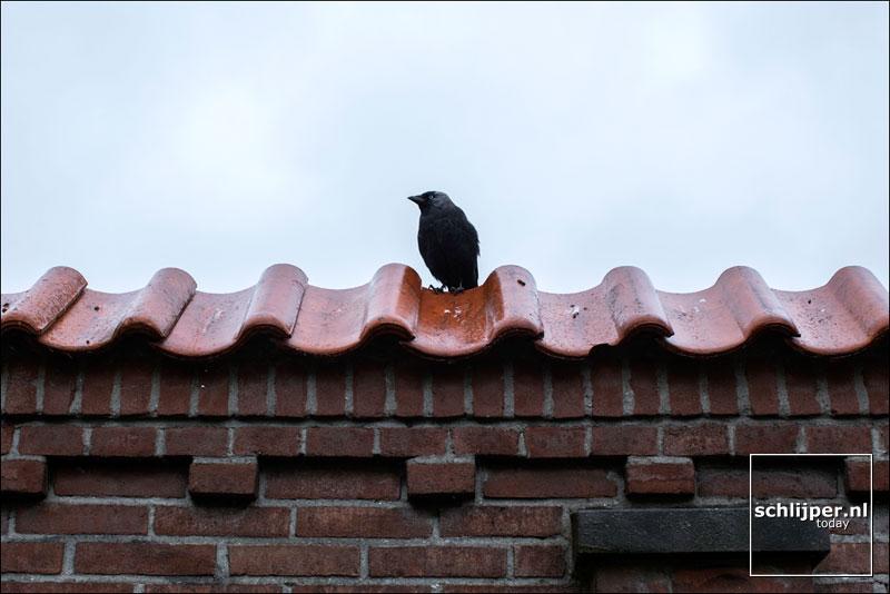 Nederland, Zaandam, 9 juli 2014