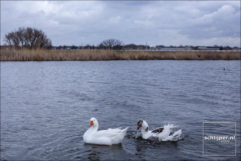 Nederland, Halfweg, 4 maart 2015