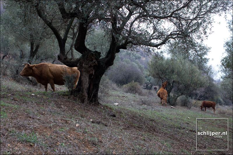 Israel, Rosh Pina, 4 januari 2016
