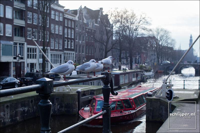 Nederland, Amsterdam, 19 januari 2016