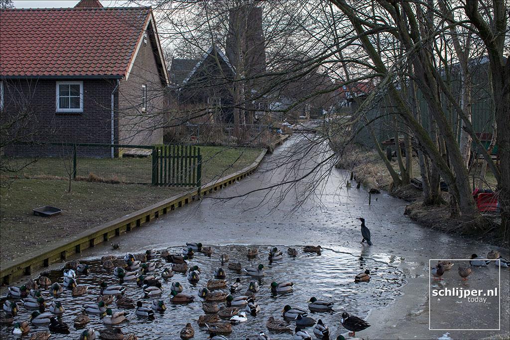 Nederland, Ransdorp, 1 maart 2018