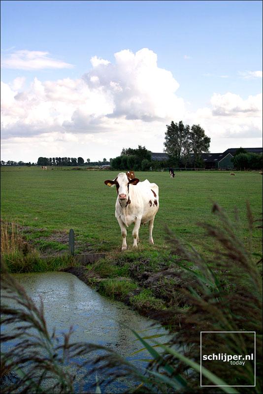 Nederland, Ouderkerk aan de Amstel, 30 augustus 2003