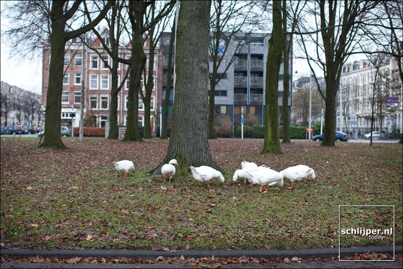 Nederland, Amsterdam, 13 december 2010