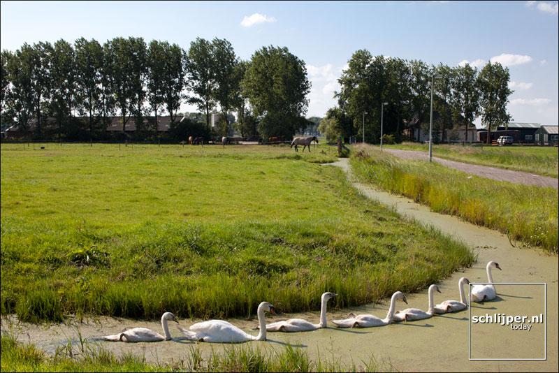 Nederland, Zunderdorp, 11 augustus 2012