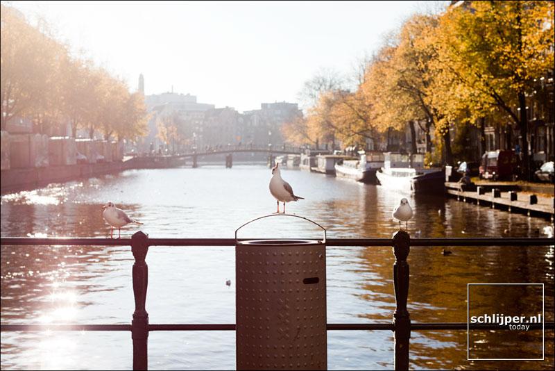 Nederland, Amsterdam, 14 november 2012