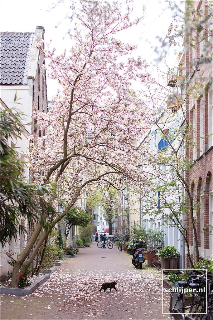 Nederland, Amsterdam, 2 april 2019