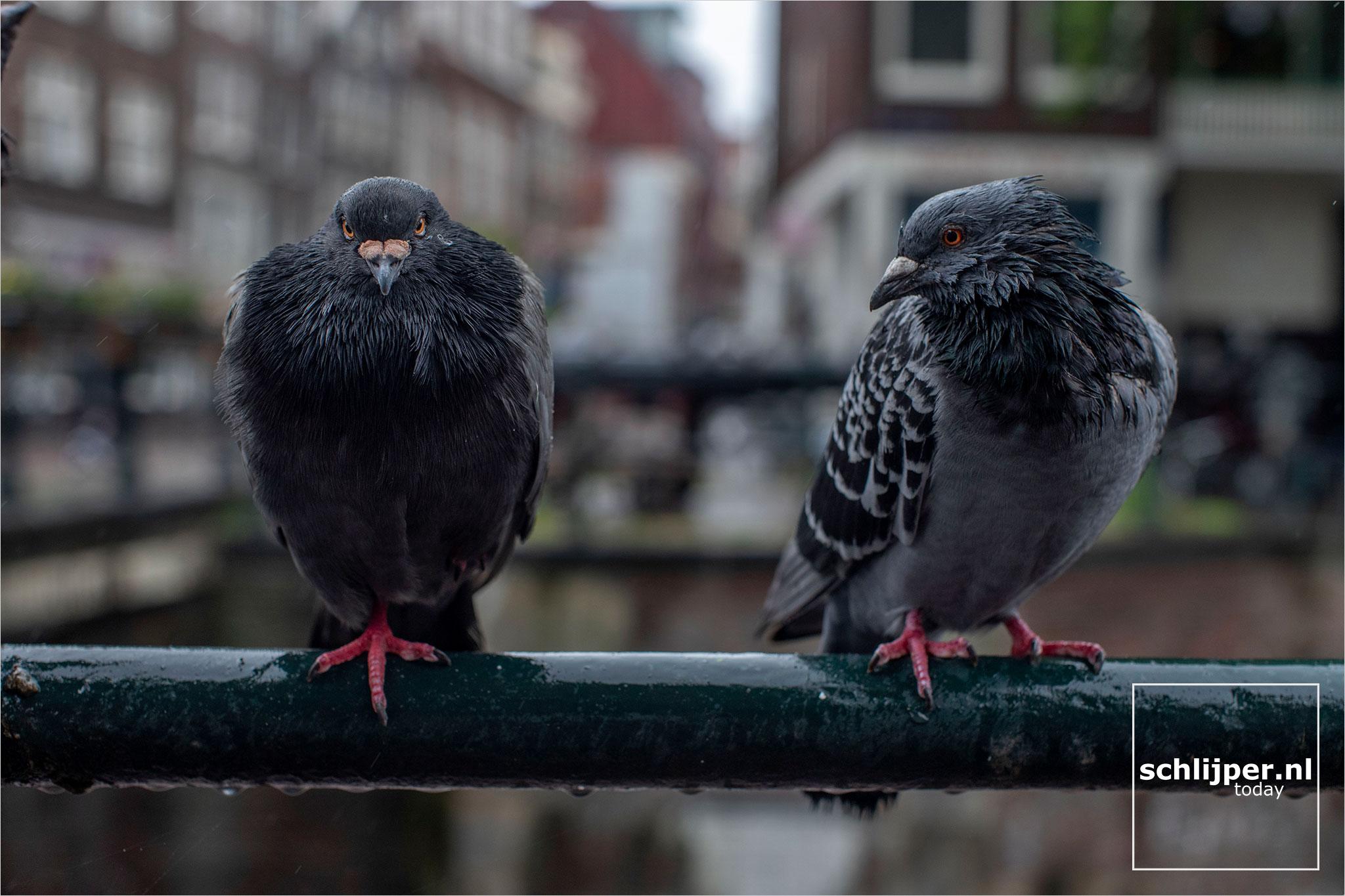 Nederland, Amsterdam, 9 juli 2020