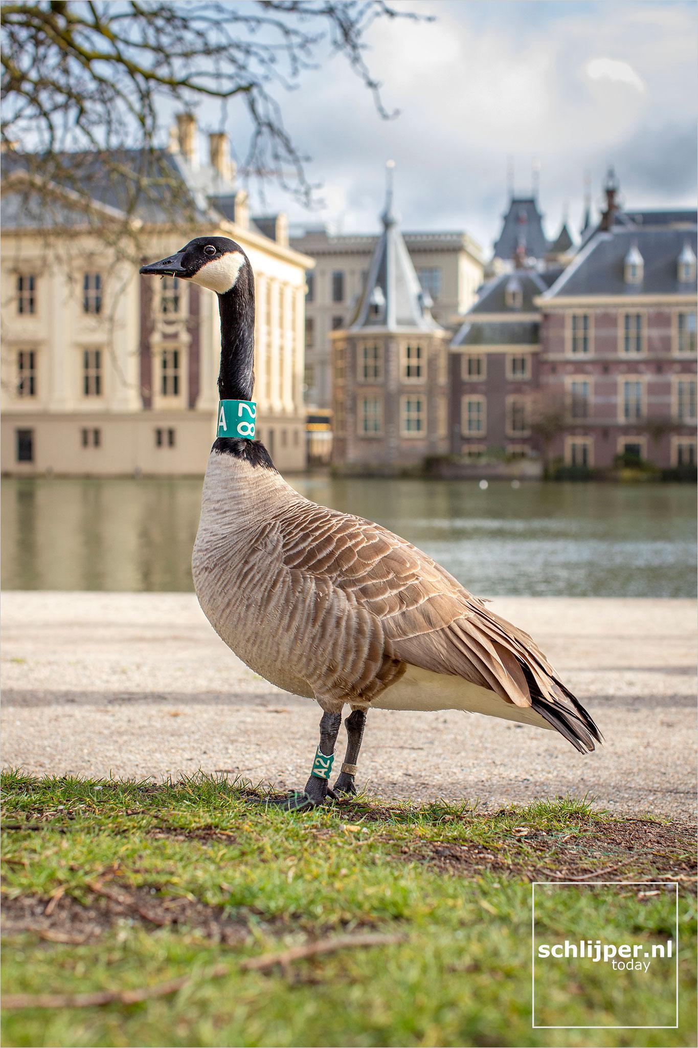 The Netherlands, Den Haag, 18 maart 2021